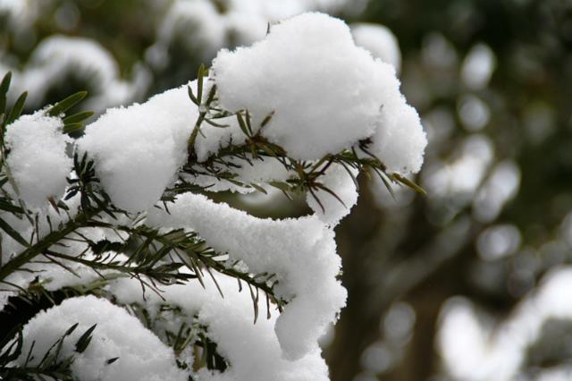 Snow04s